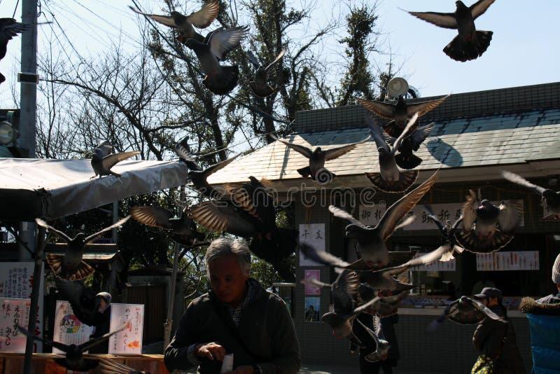 Tradução: Os pássaros ao redor fotografia de stock royalty free