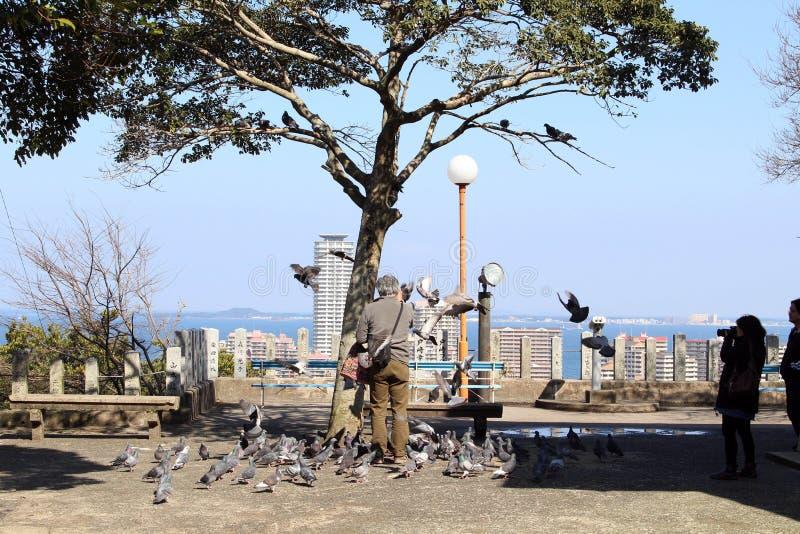 Tradução: Os pássaros ao redor imagens de stock