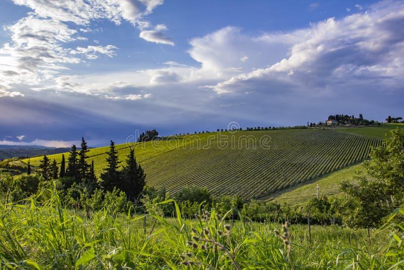 Tradycyjna wieś i krajobrazy piękny Tuscany Winnicy w Włochy tuscany winnicy fotografia stock