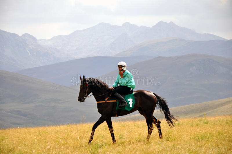 Tradycyjne końskie rasy obraz stock