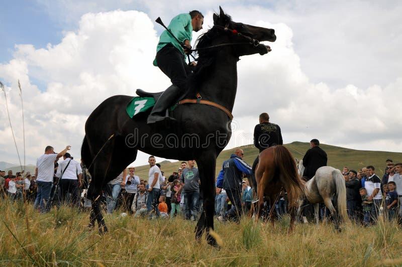 Tradycyjne końskie rasy obrazy royalty free