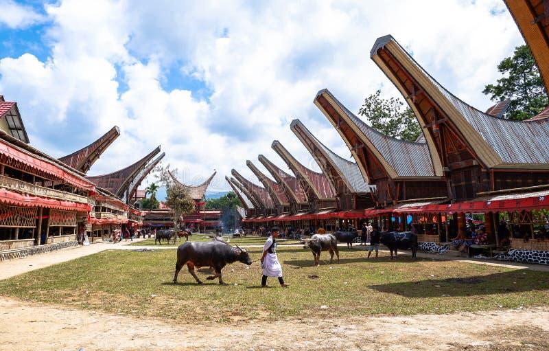 Tradycyjni festiwale Torajan przy Sulawesi zdjęcia stock