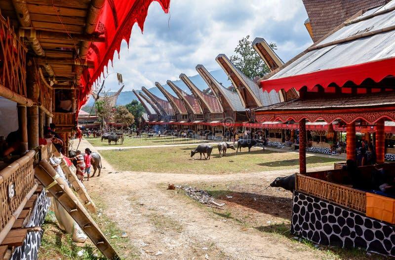 Tradycyjni festiwale Torajan przy Sulawesi zdjęcie stock