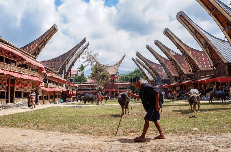 Tradycyjni festiwale Torajan przy Sulawesi fotografia stock