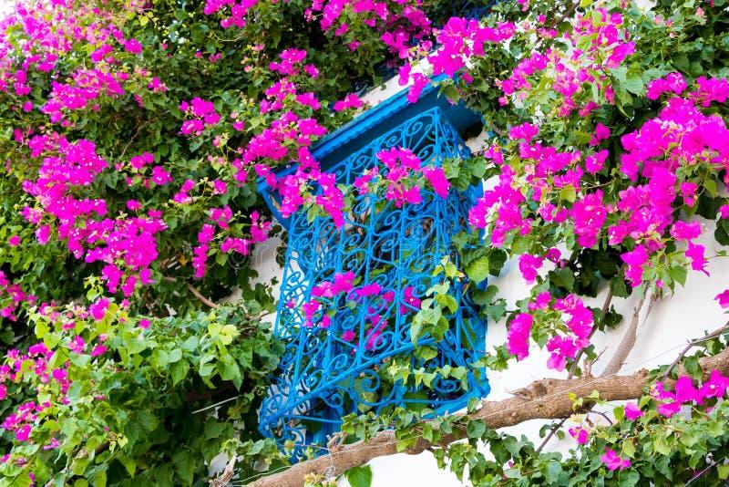 Tradycyjni starzy malujący okno i magenta kwiaty, Sidi Bou Powiedział, Tunezja, Afryka zdjęcia stock