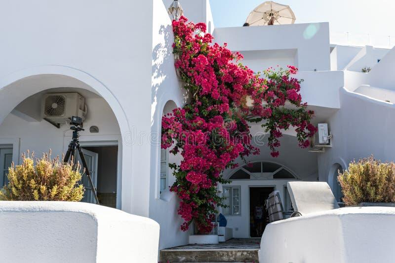 Tradycyjny grka dom, dekorujący z purpurowym bougainvillea kwitnie przy Santorini wyspą, Grecja obraz stock