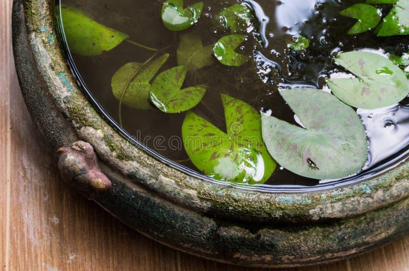 Tradycyjny Lotosowy liścia garnek z wodą w ogródzie obraz royalty free