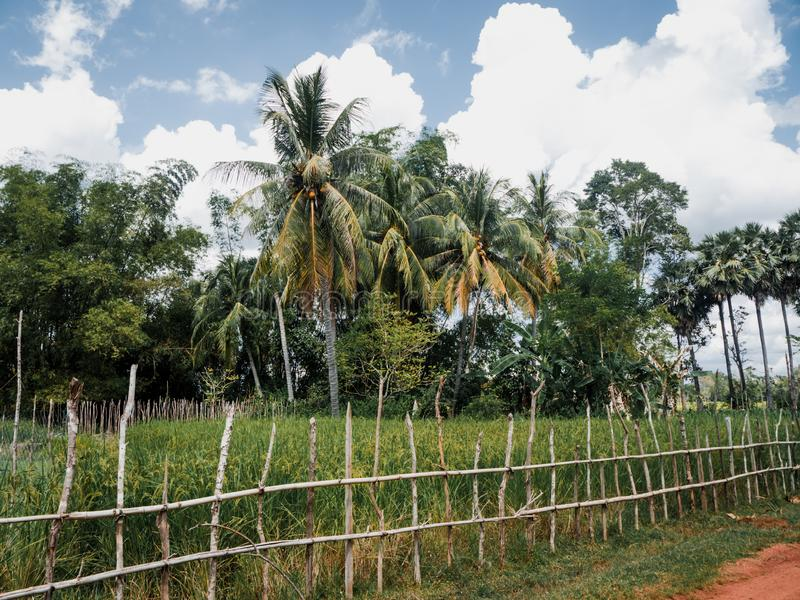 Tradycyjny ogrodzenie w polu w Kambodża obraz royalty free