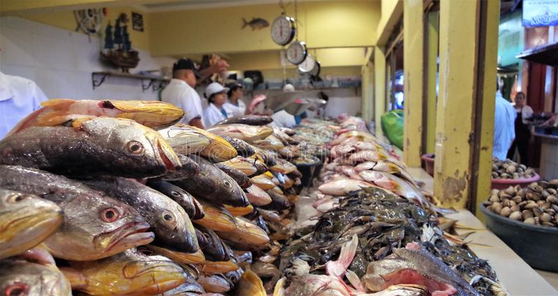 Tradycyjny owoce morza rynku pokaz w Tegucigalpa Honduras fotografia stock