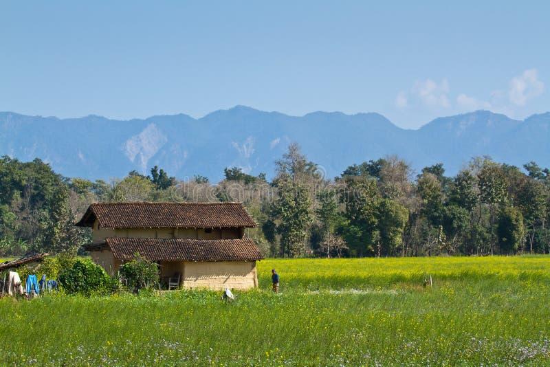 Tradycyjny taru dom w Bardia, Nepal obraz royalty free