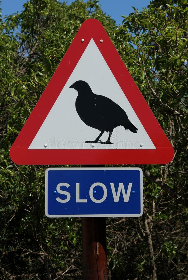 Traffic Sign. A traffic sign warns to go slow for the Barbary Partridge in Gibraltar, UK stock photography