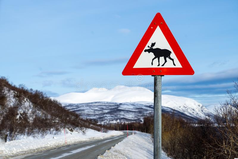 Traffic warning sign with moose near a road in arctic Norway, Ringvassoya royalty free stock image