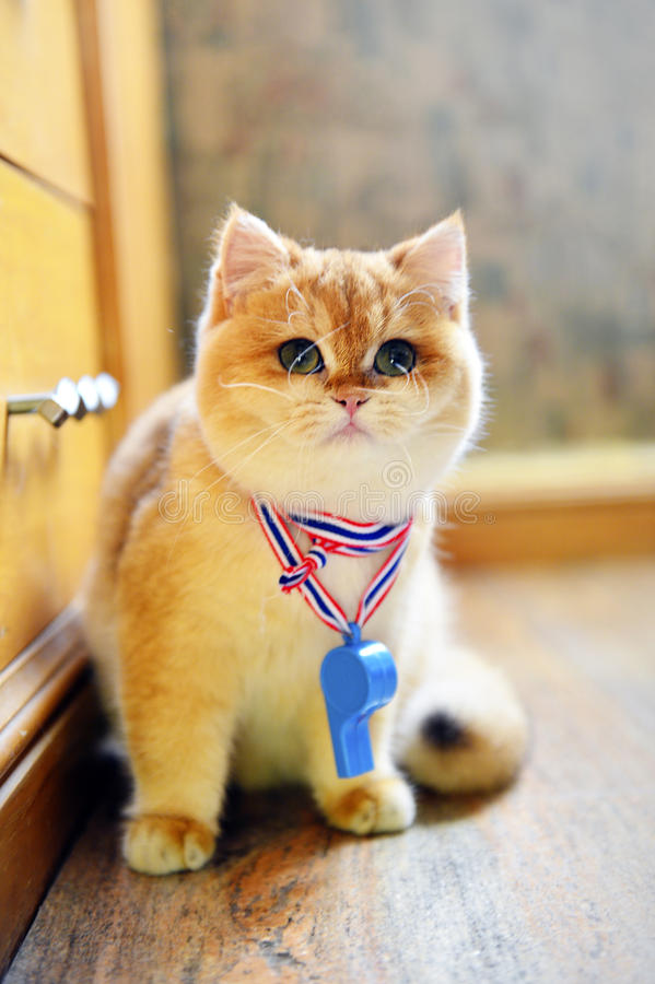 Traffic whistle cute cat stock photos