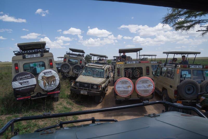 Trafikstockning: Folkmassa av safariturister som söker efter djurliv