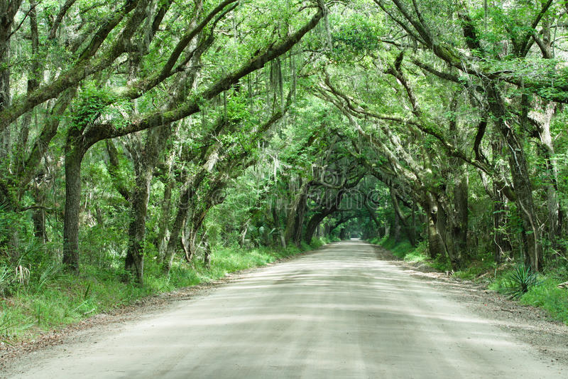 Traforo Carolina del Sud della quercia in tensione della strada della baia di botanica fotografia stock libera da diritti