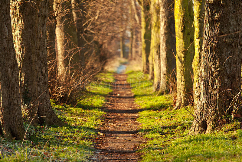 Traforo della camminata della natura immagini stock libere da diritti