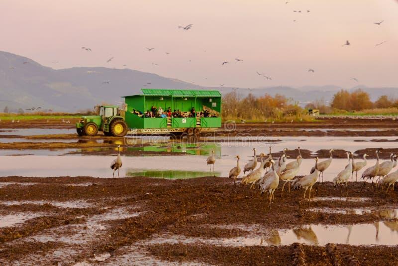 Tragende Fotografen Safari Wagons, die Kranvögel, Schutz Agamon Hula aufpassen lizenzfreies stockfoto