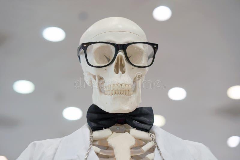 Tragende Gläser des Skeletts und ein weißer Laborkittel lizenzfreies stockbild