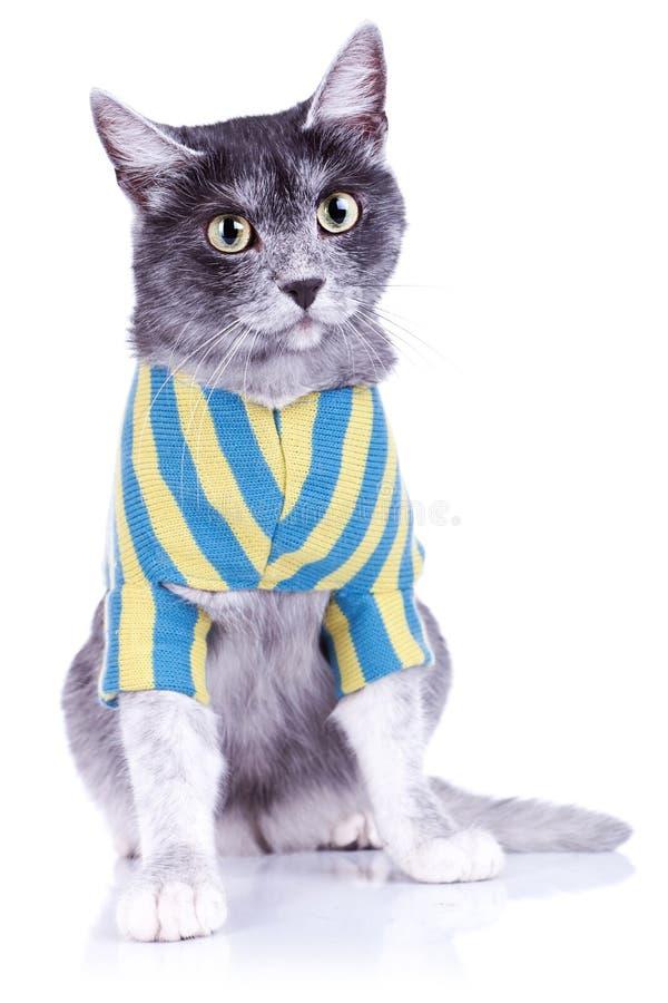 Tragende Kleidung der entzückenden Katze lizenzfreies stockfoto