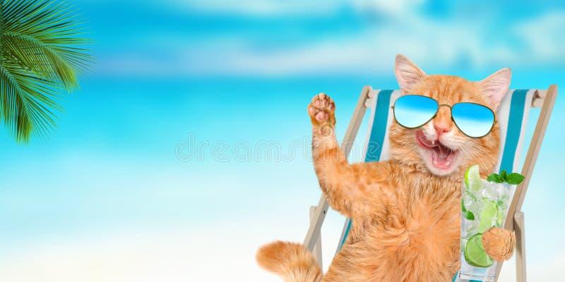 Tragende Sonnenbrille der Katze, die das Sitzen auf deckchair sich entspannt stockbild