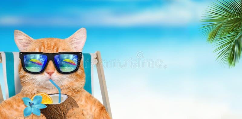 Tragende Sonnenbrille der Katze, die das Sitzen auf deckchair sich entspannt lizenzfreie stockbilder