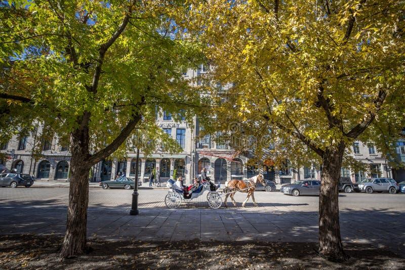 Tragende Touristen Pferdedes gezogenen Wagen-Buggys, die durch Rue de la Commune-Straße in alter Montreal-Seeseite überschreiten, lizenzfreie stockfotos
