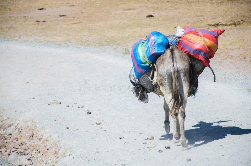 Tragende Waren eines alten Esels durch einen Steinweg in Marcahuasi stockbild