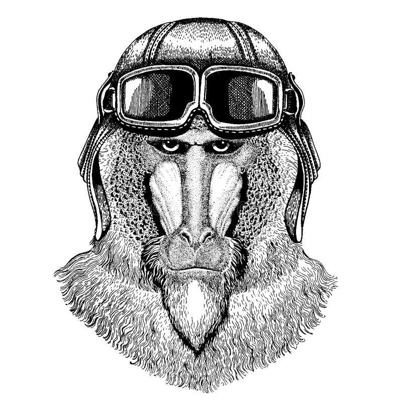 Tragender Fliegertiersturzhelm mit Gläsern Die Schlangejagd im Labyrinth Affe, Pavian, Hundaffe, gezeichnetes Bild des Affen Hand vektor abbildung