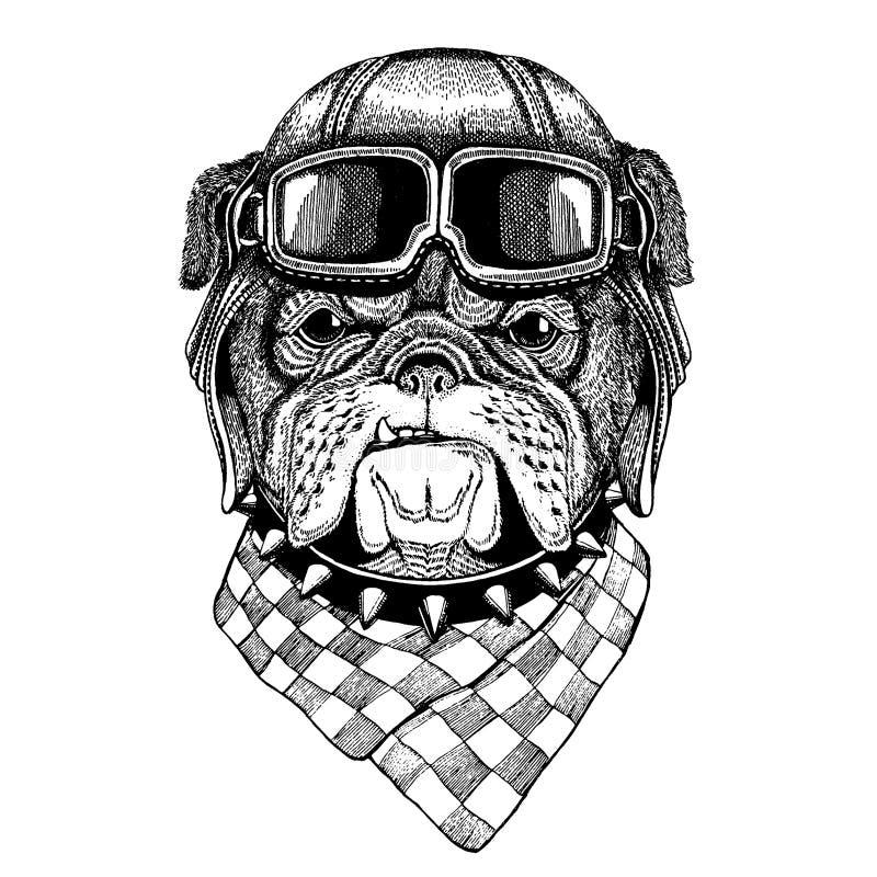 Tragender Fliegertiersturzhelm mit Gläsern Die Schlangejagd im Labyrinth Bulldogge, Hund Übergeben Sie gezogenes Weinlesebild für lizenzfreie abbildung