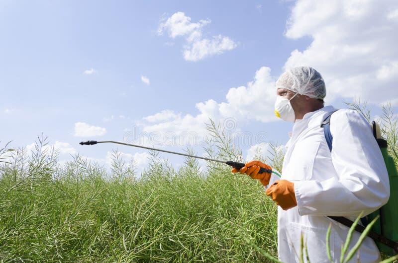 Tragender Respirator des Mannes, weiße Arbeitskleidung und Schutzhandschuhe Sprühschädlingsbekämpfungsmittel auf dem Gebiet stockfoto