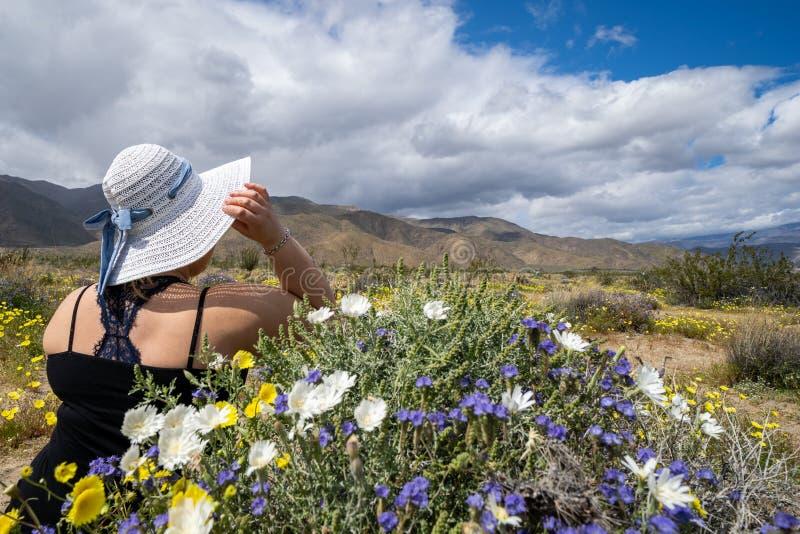 Tragender Strohhut der jungen Frau schaut heraus zur Wüstenlandschaft von Wildflowers im Wüsten-Nationalpark Anza Borrego in Kali stockbilder