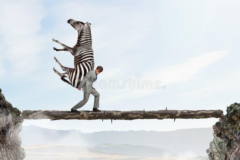 Tragendes Zebra des Geschäftsmannes Gemischte Medien lizenzfreie stockfotos
