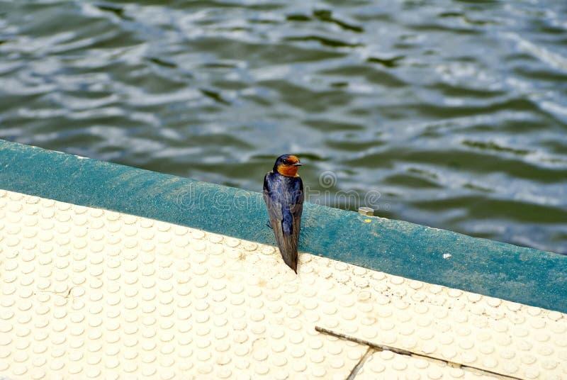 Trago agradable de Barron River imagenes de archivo