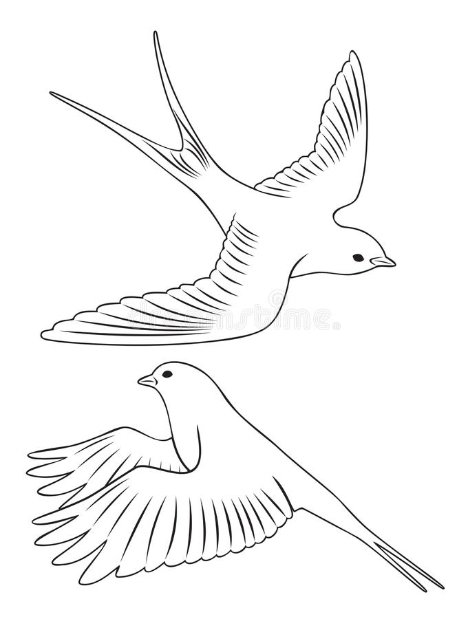 Trago del pájaro libre illustration