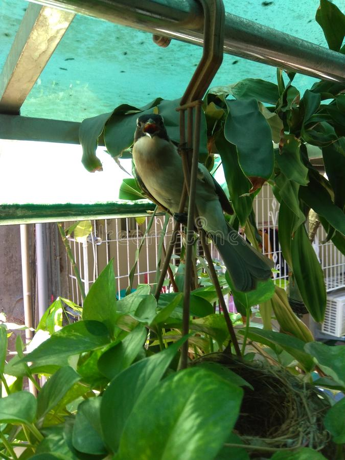 Trago del pájaro de la madre imagen de archivo