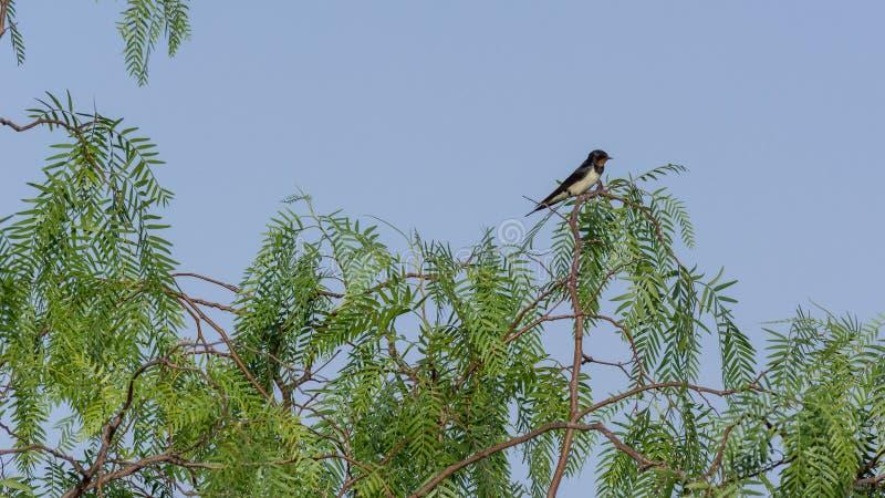 Trago en un árbol, Kefalonia Grecia imagen de archivo