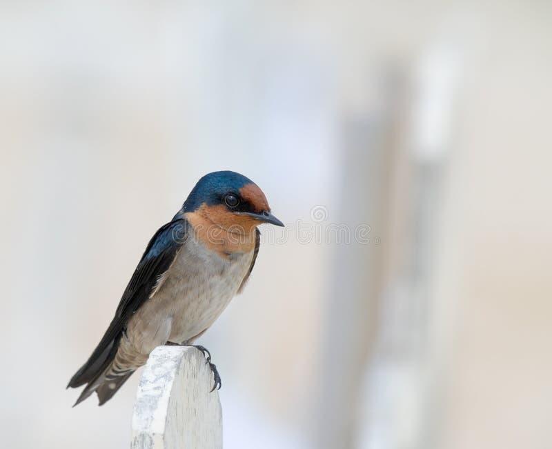 Download Trago Que Se Encarama En La Cerca Foto de archivo - Imagen de animal, azul: 7151728
