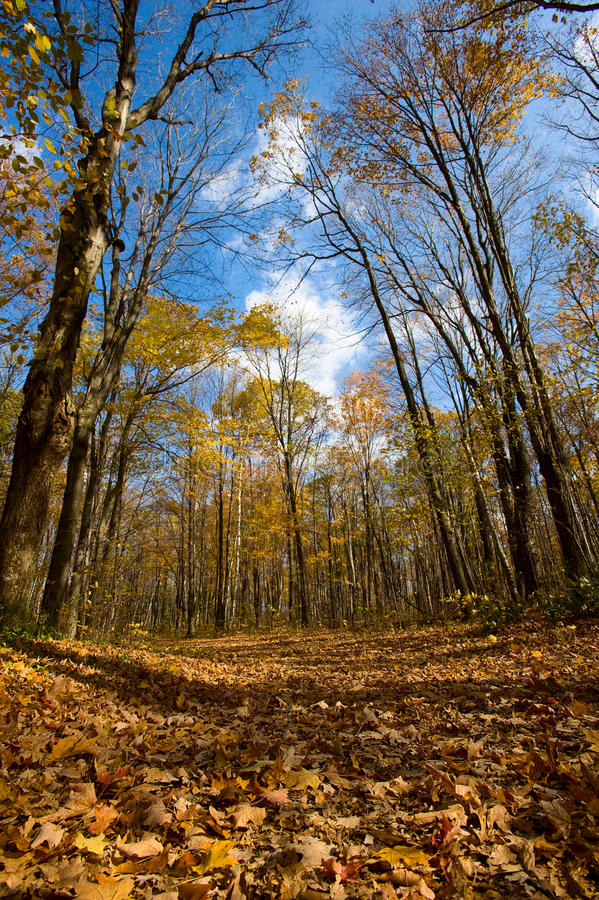 Download Trail stock image. Image of trek, shadow, path, branches - 16644309