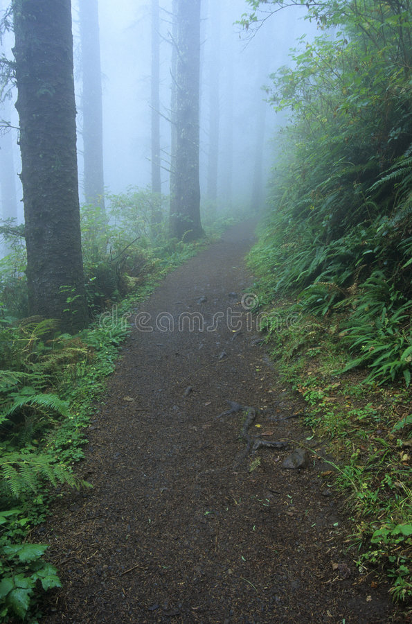 Download Trail 23 stock image. Image of hike, directions, color - 524525