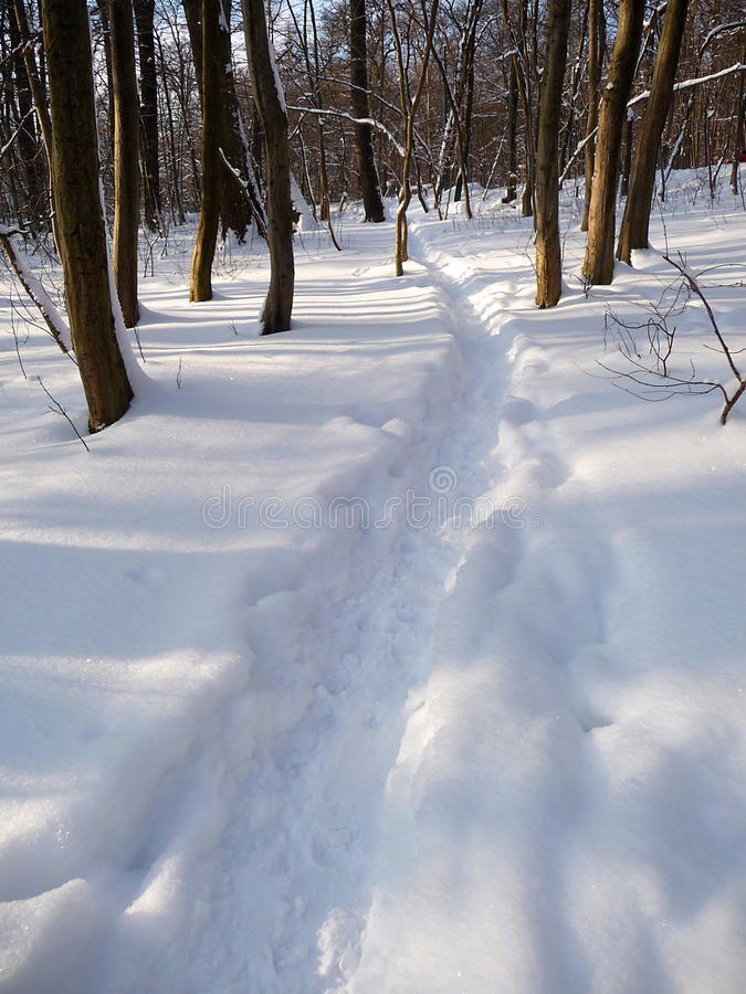 Download A trail stock photo. Image of winter, forest, silence - 23849236