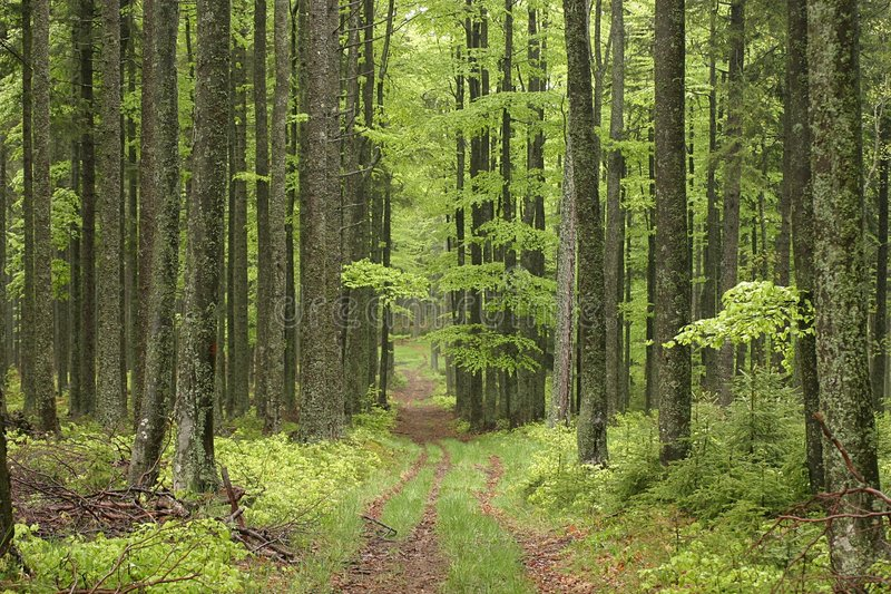 Download Trail stock image. Image of path, spring, trees, forest - 288659