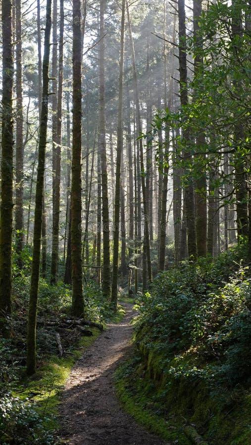trail royaltyfri foto
