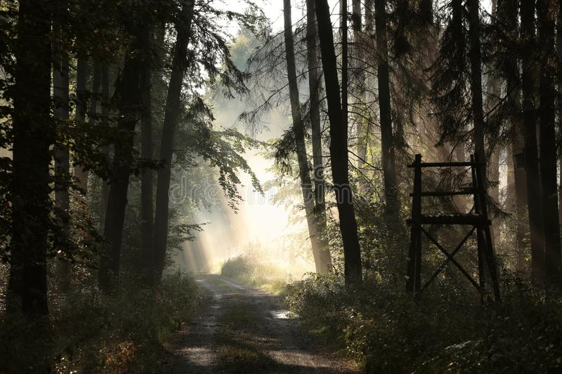 Path through a misty autumn forest at sunrise stock images
