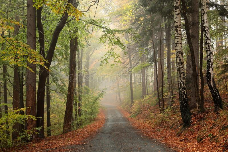 Trail through an autumn forest in foggy weather royalty free stock image