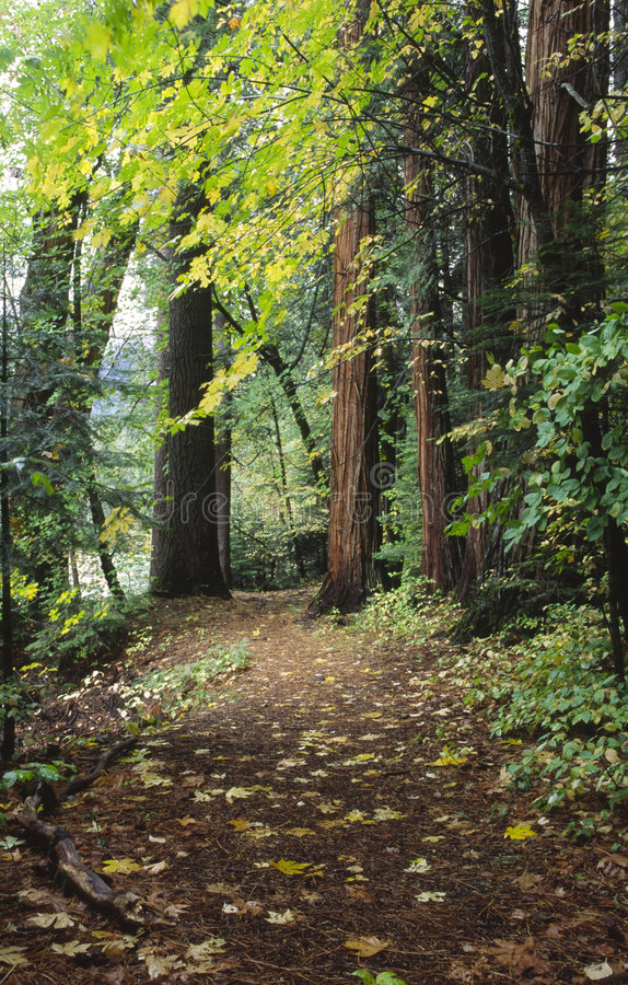 Trail through autumn forest in Yosemite stock images