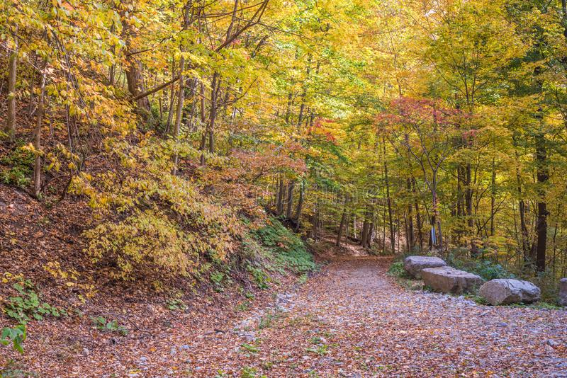 Trail in autumn park royalty free stock image