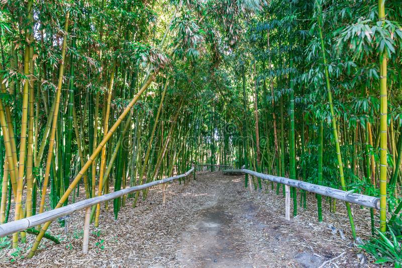 Trail Through Bamboo Forest royalty free stock images