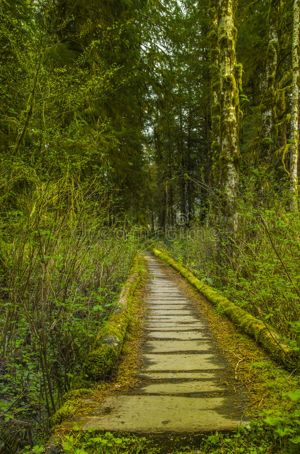 Trail bridge in the Hoh Rain Forest Olympic National Park Washington state. Wooden hiking trail bridge through the Hoh rain forest of Olympic National Park stock photos