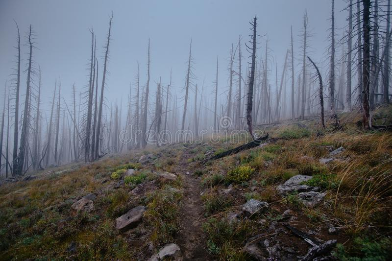 Trail between burnt trees, disapearing in the fog, during dark day royalty free stock photography