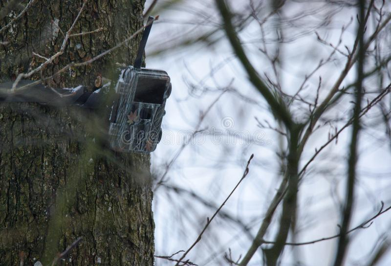 Trail camera. Hunting trail camera setup on tree stock photos
